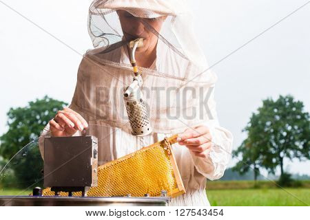 Beekeeper filling honeycombs in honey extractor