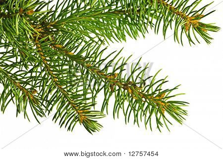 Close up view of the Christmas tree isolated on white