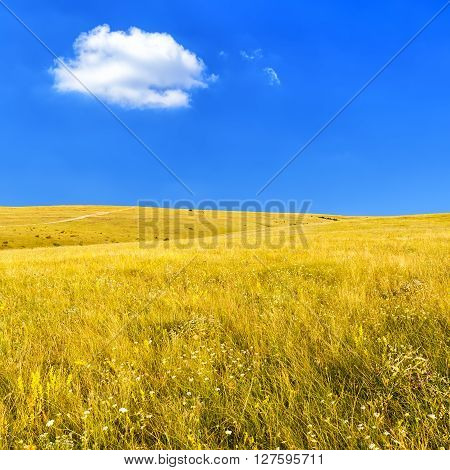 Wild Steppe with dry grass against a clear blue sky on a hot summer day