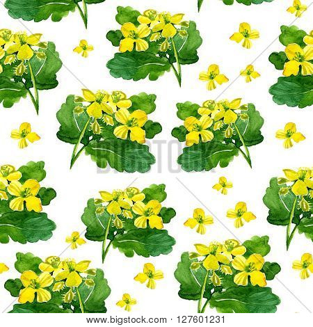 watercolor celandine Botanical pattern on a white background