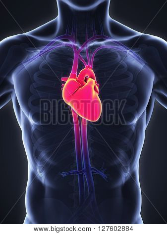Human Heart Anatomy Illustration . 3D render