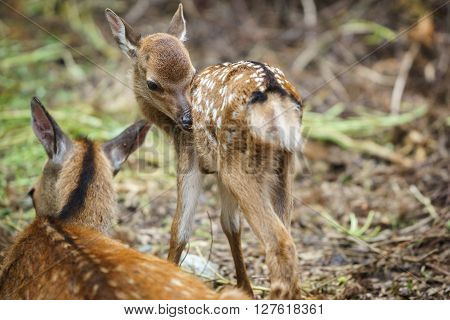 Detailed view of mom deer and fawn in a forest, focus on fawns eye