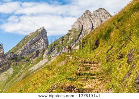 Stunning View Of Alpstein Massif