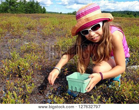 Picture of a young girl picking blueberries in a field around Lac St Jean,Quebec,Canada.
