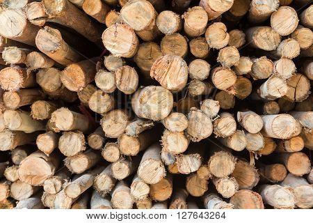 Stock of eucalyptus logs in a lumber yard