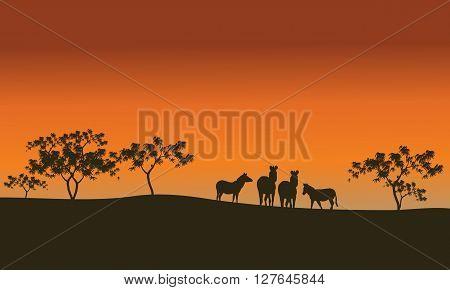zebra family of silhouette in hills at morning