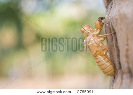 close-up to the cicada slough holding with the coconut tree