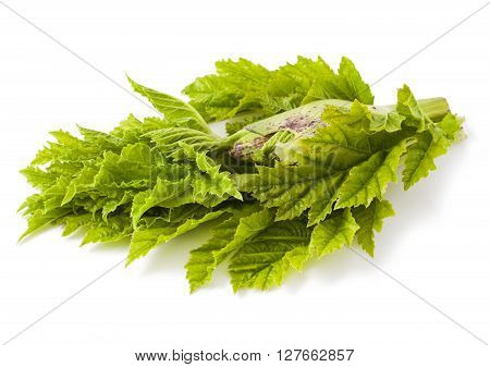 Heracleum plant isolated on a white background
