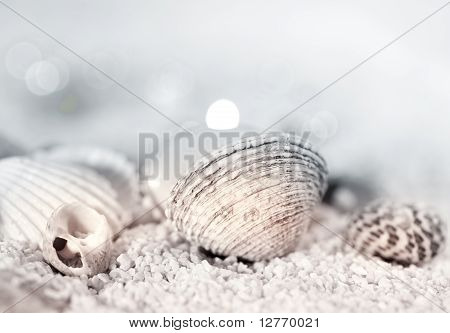 Sea urchin and mussel on stone background poster