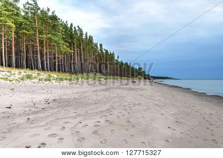 Abandoned beach of Liepaja Latvia with sand and pinetrees