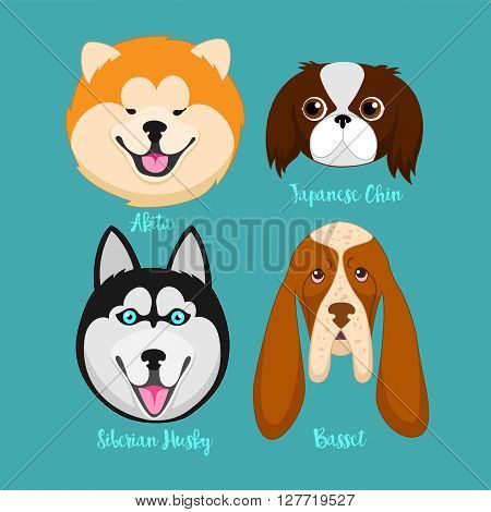 Different breeds of dogs.Akita, Siberian Husky, Japanese Chin, basset.Dog characters. Cartoon vector illustration.Set of 4 stickers different breeds dogs, handmade. Head dog. Icons with dogs.