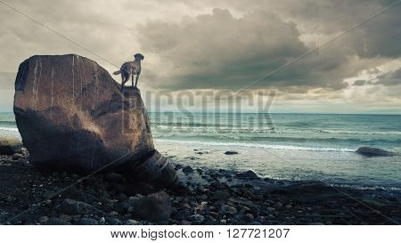 Dog standing on a rock and looking over the ocean