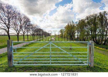Backlit image of a closed galvanized steel gate between two wooden poles in front of a seemingly endless embankment with grazing sheep and lambs. It is a cloudy day in the beginning of springtime.