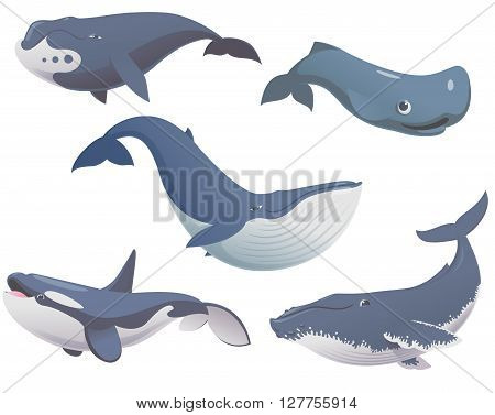 Big set of cartoon cute and funny whales sea animals set sea creatures collection cartoon animals set vector illustration of blue whale killer whale sperm whale bowhead whale and humpback whale