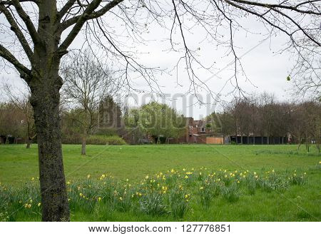 Beautiful european countryside - field and trees