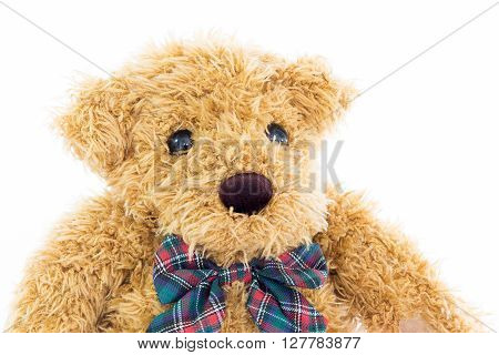 Close Up Teddy Bear Portrait On White