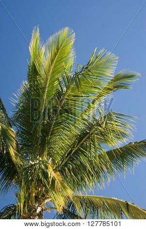 Green crown and fronds of a tropical palm tree against a clear blue sky symbolic of travel and summer vacations