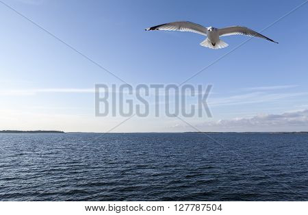 Glittering seascape in sunshine. Blue sky, some wind and evening lit. Seagull in the air. ** Note: Soft Focus at 100%, best at smaller sizes