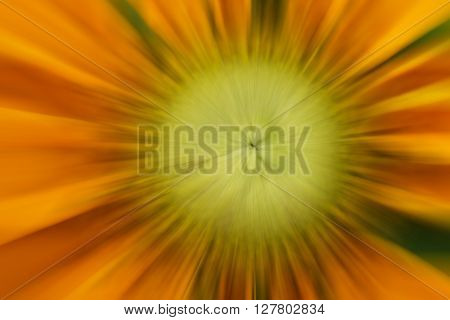The flower background with blurred zoom pattern