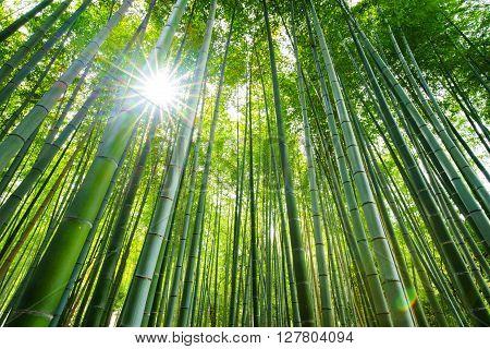Bamboo forest with sun flare Arashiyama Kyoto Japan