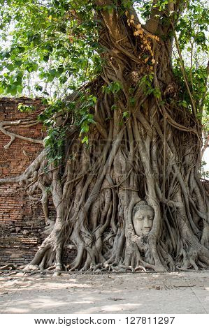 Head of Buddha statue in the tree roots at Wat Mahathat Ayutthaya Thailand