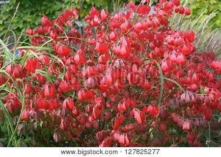 a Small shrub with some red leaves