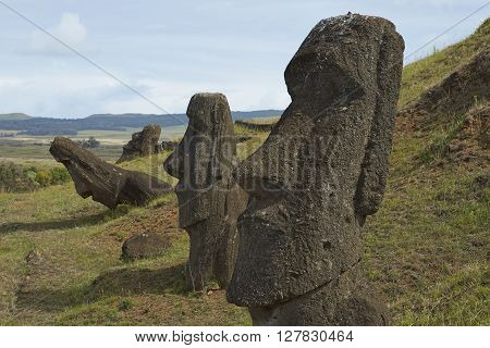 Rano Raraku. Abandoned and partially buried statues on the slopes of the extinct volcano which was the quarry from which the Moai statues of Rapa Nui (Easter Island) were carved.