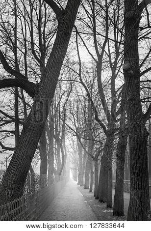 Fog in the park in the morning. Nobody.