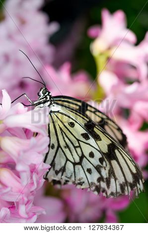 Beautiful close up of a butterfly on a pink flower
