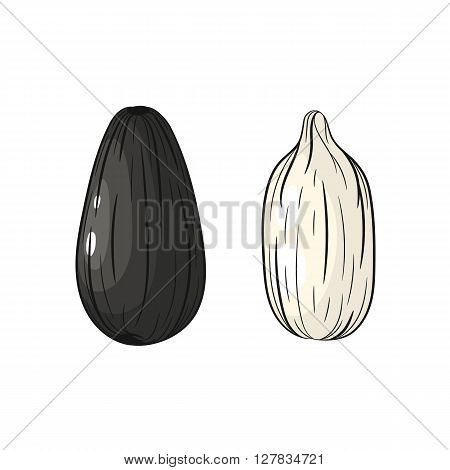 Sunflower seeds. Vector hand drawn sunflower seeds illustration isolated on white background - stock vector