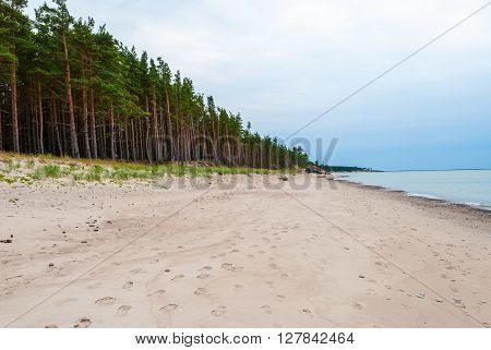 Abandoned beach with pinetrees in Liepaja Latvia