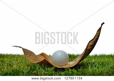 Golf ball on an obstructing leaf in golf course isolated on white background