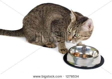Cat After Eating