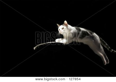 poster of A cat jumping