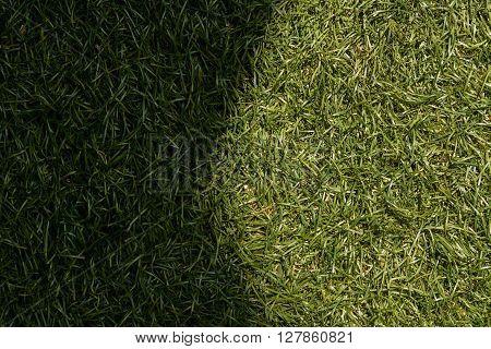 Green Grass Texture Background, Sunlight Causes Shadows.
