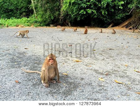 Monkey in tropical forest, exotic animal monkey in wild nature, monkey family, lovely monkey sight, monkeys family photo, monkey in jungle, wanderlust in tropical forest, summer vacation in Thailand