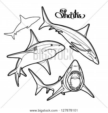 Graphic collection of vector sharks drawn in line art style. Oceanic whitetip shark isolated on white background.  Coloring book page design