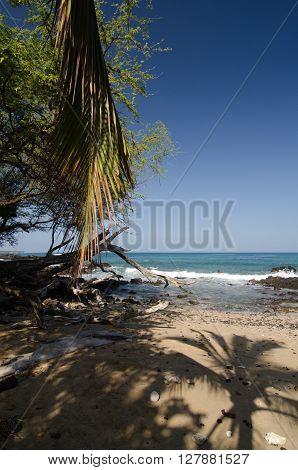 Shadows Of Palm Tree At Puako Beach