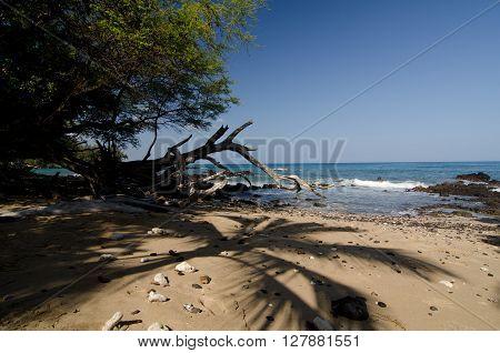 Shadows Of Palm Tree At Puako Beach - 2