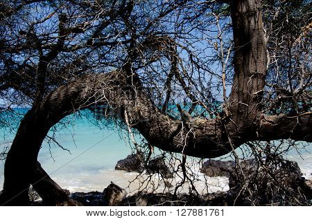 Wooden Web At Puako Beach -2