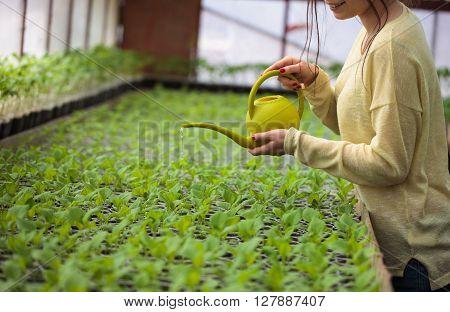 Young Farmer Woman Watering Green Seedlings In Greenhouse