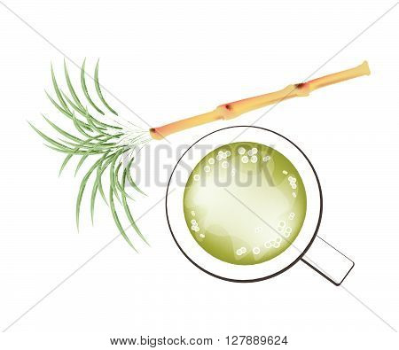 Beverage and Drink Illustration of Fresh Sugarcane and A Glass of Sugar Cane Juice Isolated on White Background.