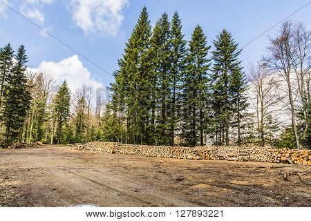 Wood on the square in the forest ready for transport.