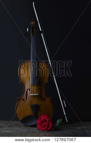 Low key violin and rose flower with soft lighting
