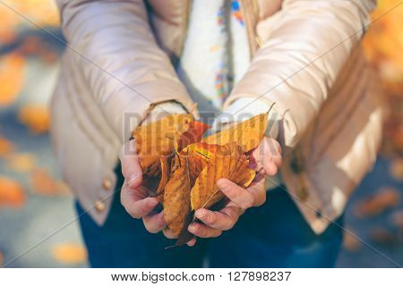 Woman With Brown Jacket Holding Golden Leaves