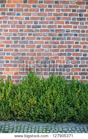 Old red brick wall with green plants