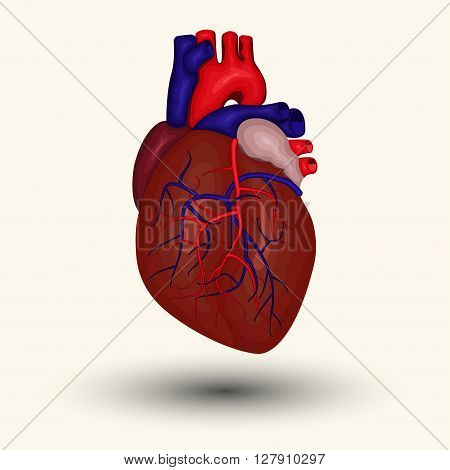 Human heart sign Human heart icon human heart cartoon designed human heart web icon human heart new human heart emblem heart diagnostic center sign heart diagnostic center icon vector