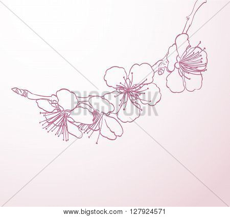 blossoming tree flowers line art hand drawing. spring stylish background with pink flowers outline vector