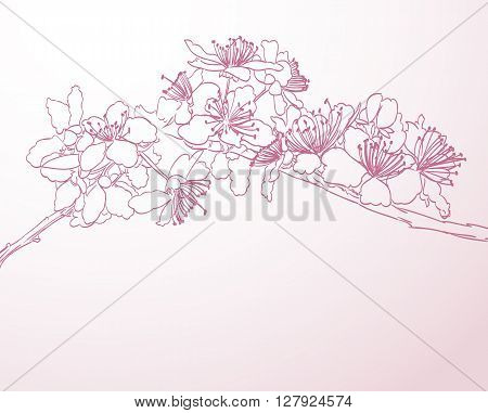 blossoming tree line art hand drawn illustration. spring background with pink plum flowers vector