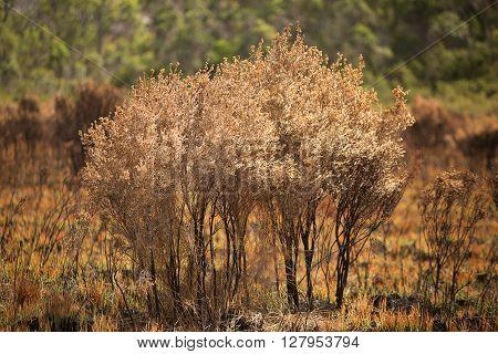 Vegetation Damaged By Bushfire